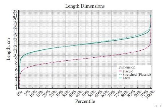 Longitud del pene