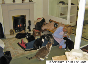 Lincolnshire Trust For Cats