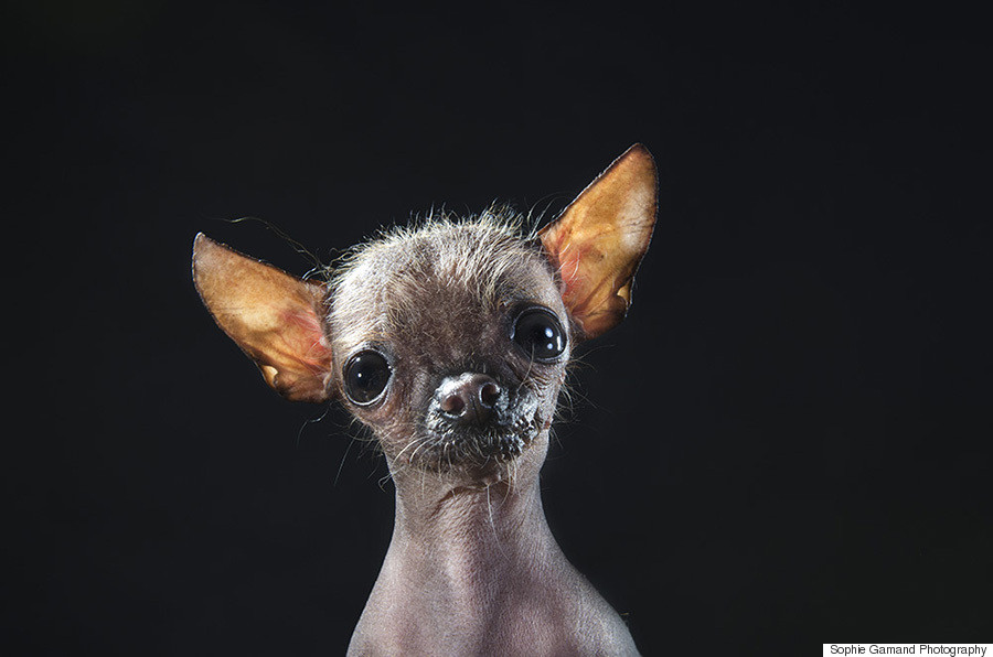 Hairless Dogs Photo Series Brings Attention To Ethical Breeding