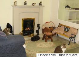 http://i.huffpost.com/gen/2687204/thumbs/s-CATS-large.jpg