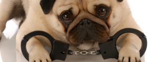 Animal Handcuffs