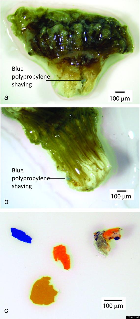 coralplastic