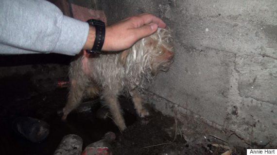 A incr�vel transforma��o de Bitty, cachorro resgatado no esgoto