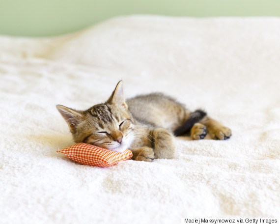 kittens nap