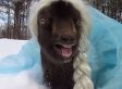 Goat Dressed As Elsa Is The 'Frozen' Tribute You'll Remember Forever