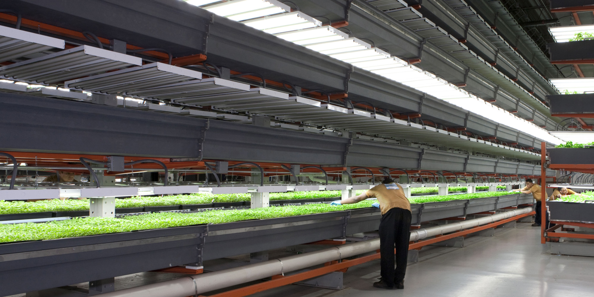 Why Vertical Farming Could Be On The Verge Of A Revolution