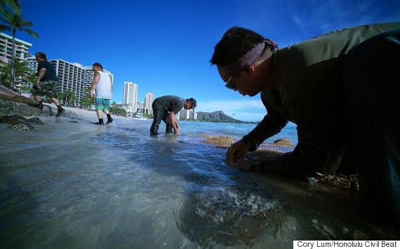 waikiki beach crew