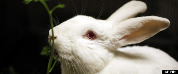 Easter Bunny Hunt 2011