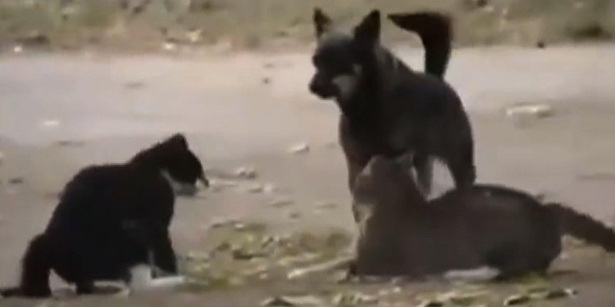 fat cats salt lake