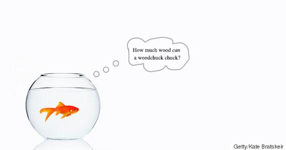 goldfishwonders