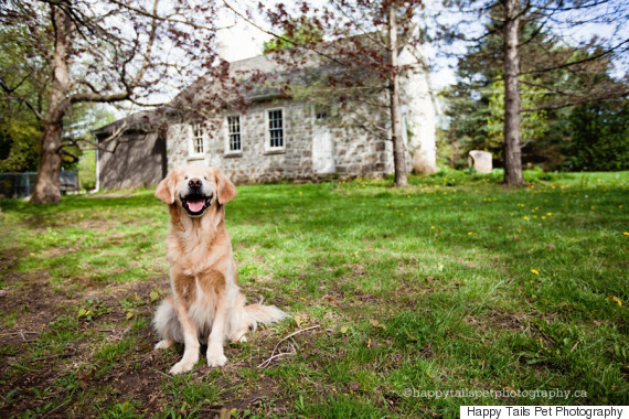 Smiley A Blind Therapy Dog Perfectly Lives Up To His Name HuffPost - Born blind smiley the golden retriever becomes a loving therapy dog