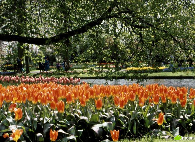 Photos les 10 plus beaux jardins du monde - Les jardins du bout du monde ...