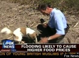 Fox News Dog