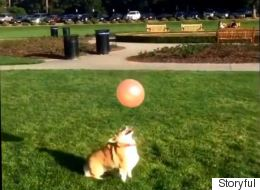 This Corgi Playing Keepy Up With A Balloon Will Make You Smile