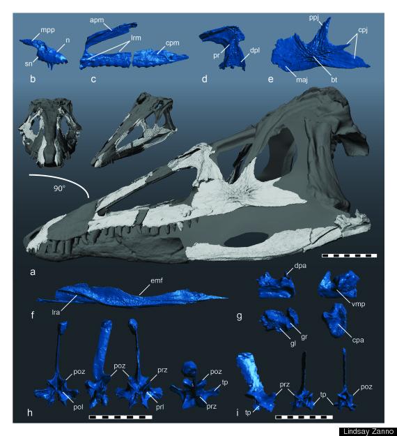 carnufex fossils