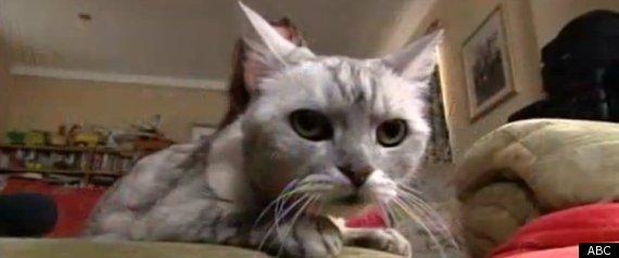 SMOKEY THE CAT WORLDS LOUDEST