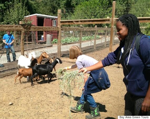 green tours farm