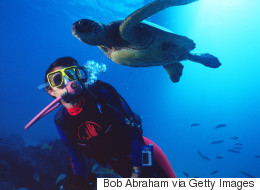 Is It Time To Take Green Sea Turtles Off Threatened Species List?