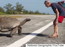 Explorer Interrupts Mating Giant Tortoises: The Translated Version