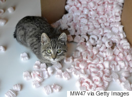 Scientists Find Ingenious Way To Reuse Those Pesky Packing Peanuts