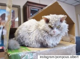 Meet Albert, The Cat Who Looks Permanently Angry