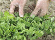 Farm Bill 2012: Time For An Overhaul With Innovative Farming Systems