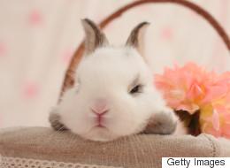 16 lapins grincheux qui ne fêtent plus Pâques