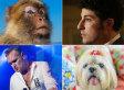 When Animals Attack: The Celebrity Edition