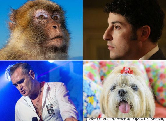 celebs attacked by animals