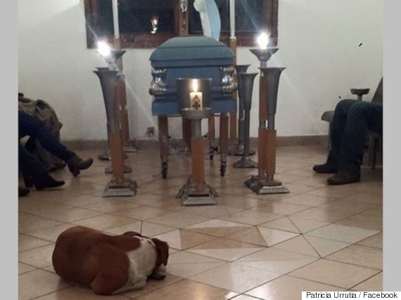 dogs at funeral