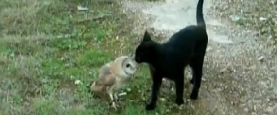 Cat And Owl Playing