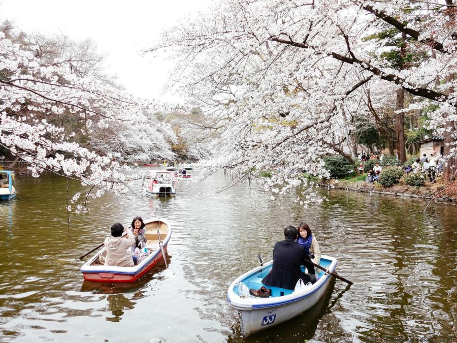hanami japon