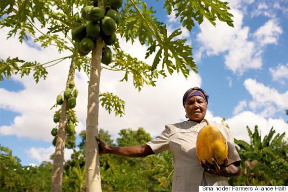 haiti farmers alliance