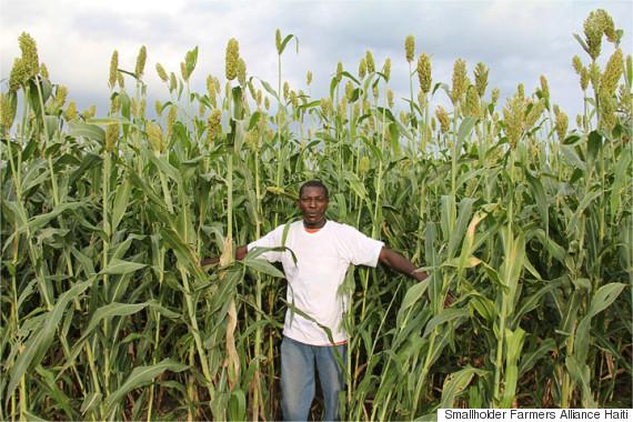 farmers alliance haiti 2