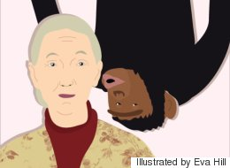 Jane Goodall Gets A Birthday Kiss