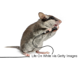 LISTEN: Mice Can Sing. Bet You Never Knew That.