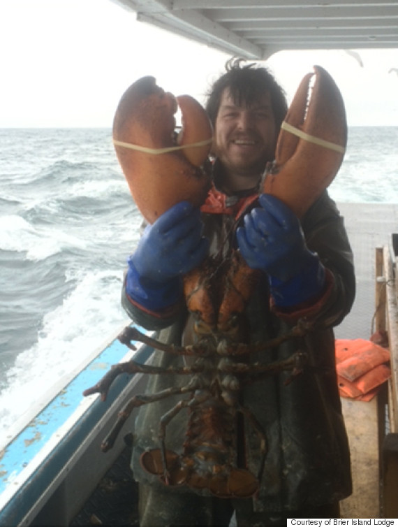 Giant Lobster Weighing 17 Pounds Snagged By Nova Scotia Fisherman