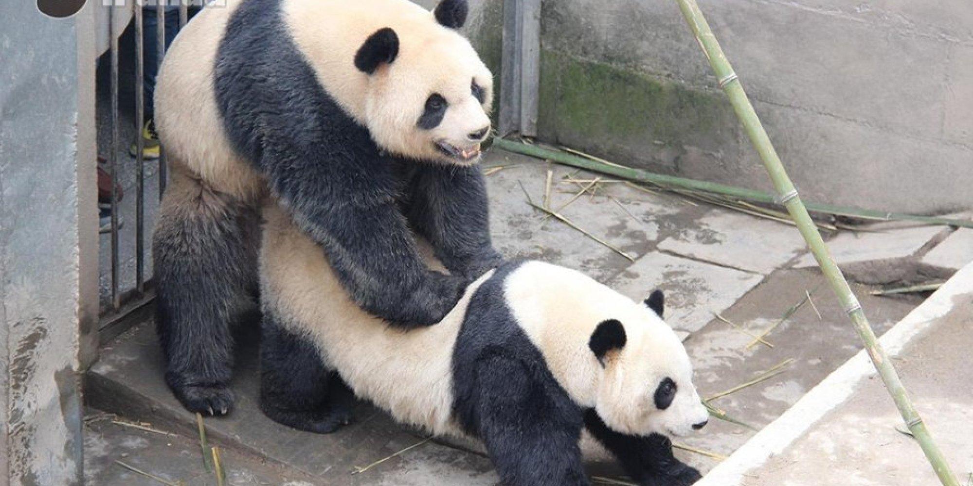 Фото секс панда 6 фотография