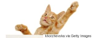 VOTE CAT