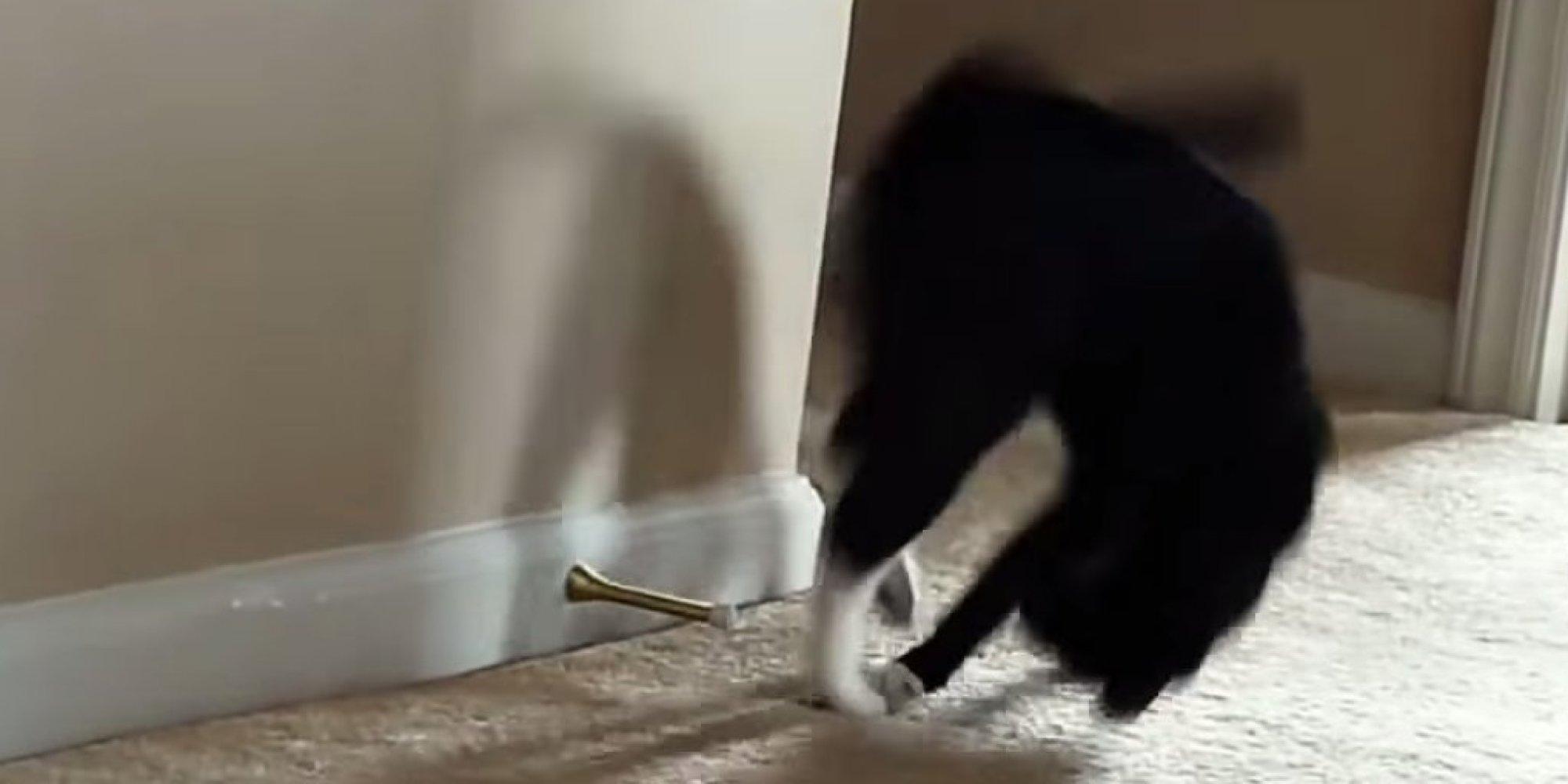 Here 39 s 2 minutes of nothing but cats battling door stoppers huffpost - Cat door stoppers ...