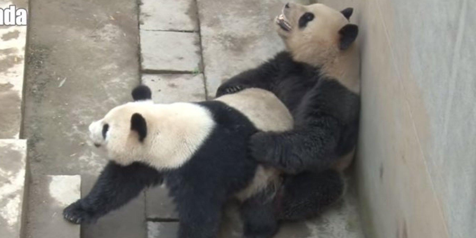 видео панды секс