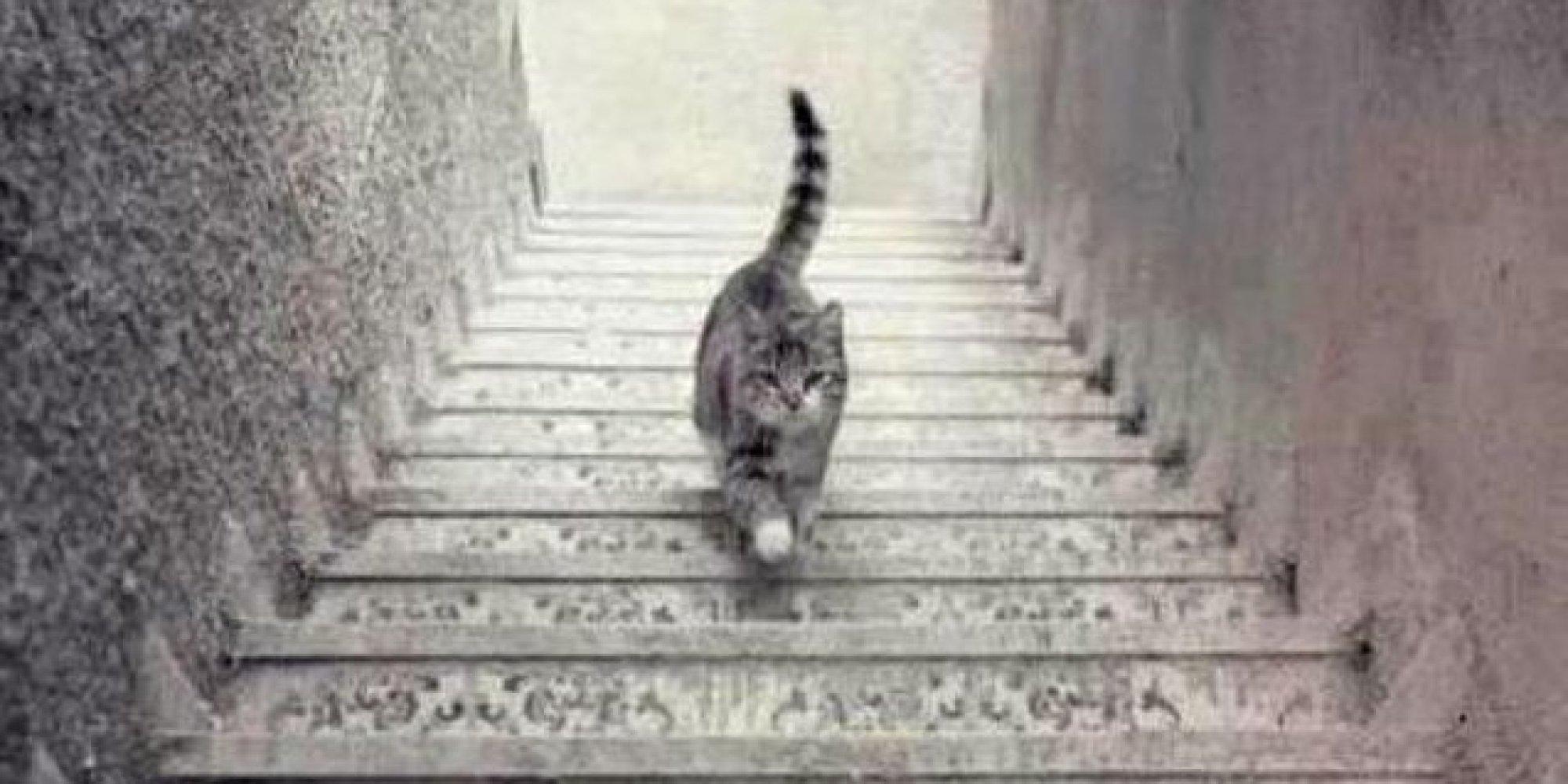 Twitter: Twitter: Crees que este gato sube o baja las escaleras? El
