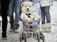 The Top 10 Pet Friendly Colleges