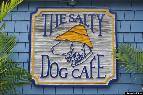 Salty Dog Band Myrtle Beach