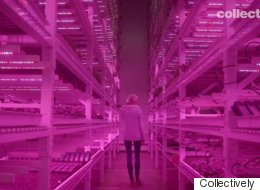 The Sustainable Food Film Everyone Should Watch Right Now
