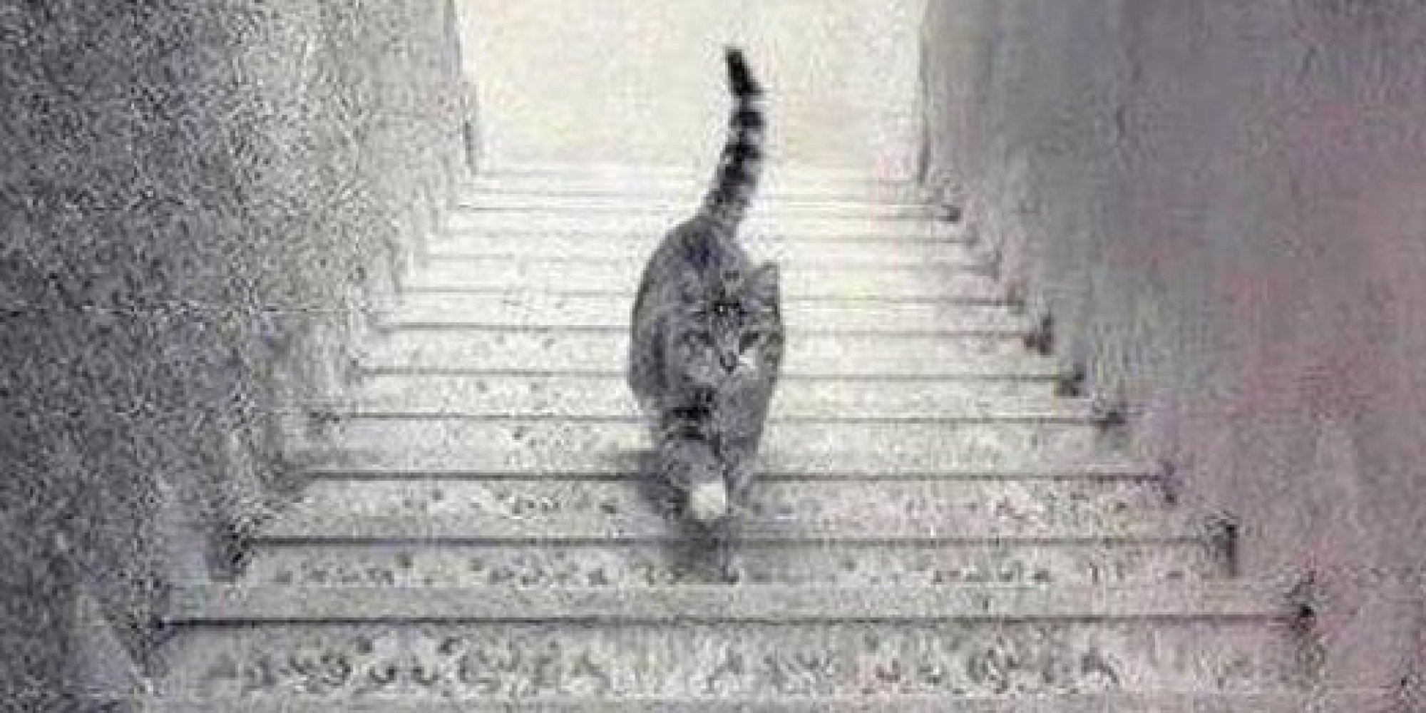 illusion optical cat brain down stairs going illusions mind stair cool staircase steps trick ilusion another perception left right go