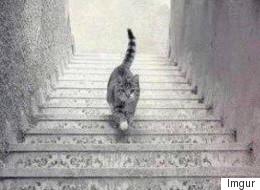¿Este gato está subiendo o bajando las escaleras?