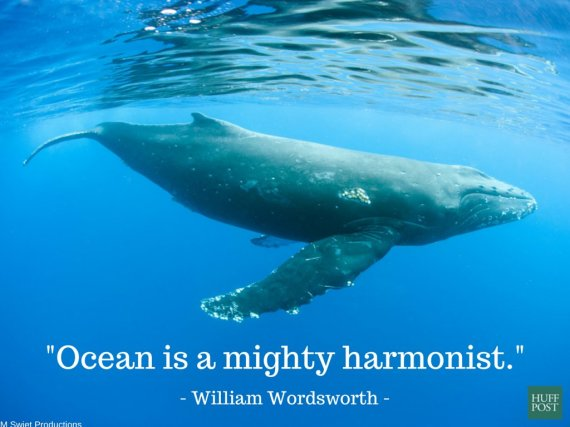 11 Quotes About The Ocean That Remind Us To Protect It ...