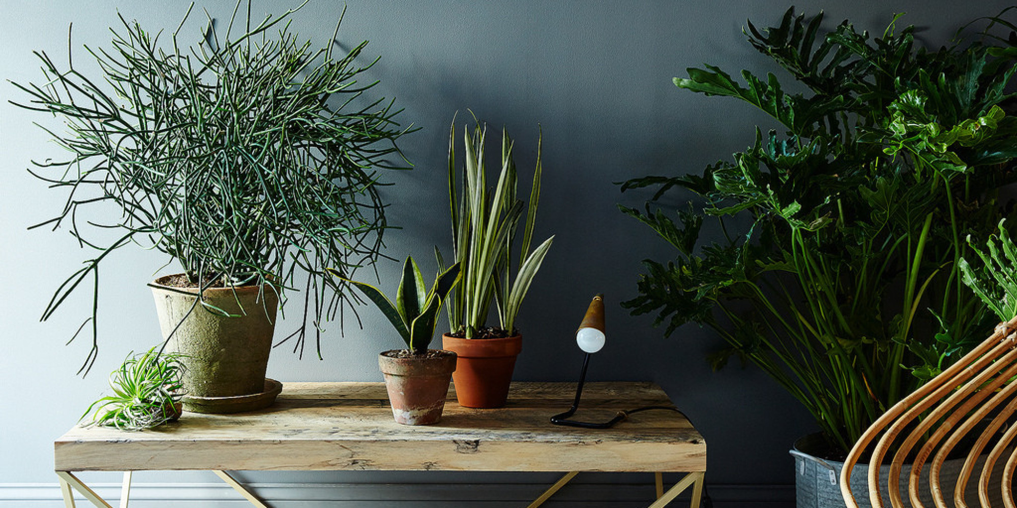 5 no-kill houseplants for any home | huffpost