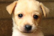 Puppy | Pic: Sebastian-Dario/Flickr